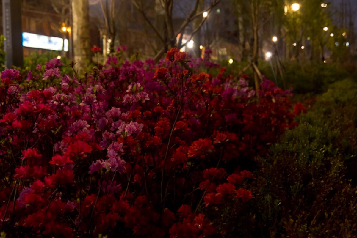 POTD day 116 Night Flowers