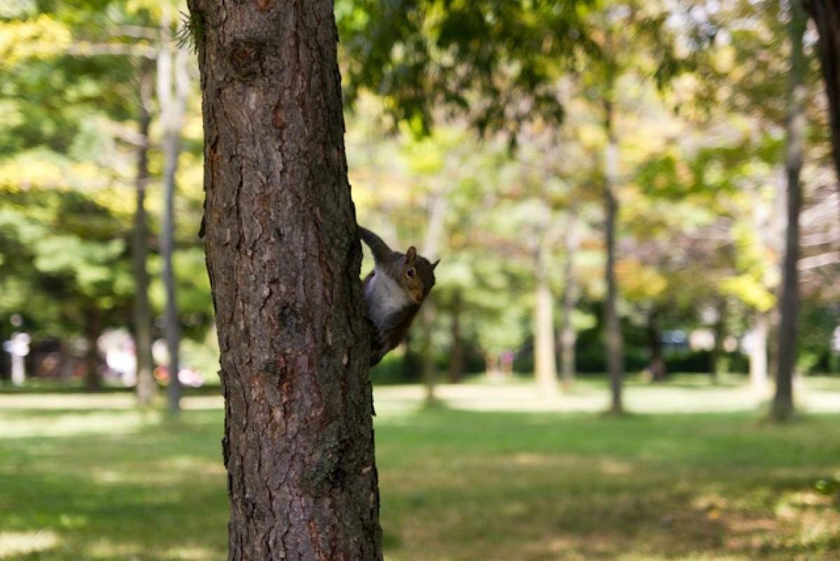 POTD day 184 Squirrel