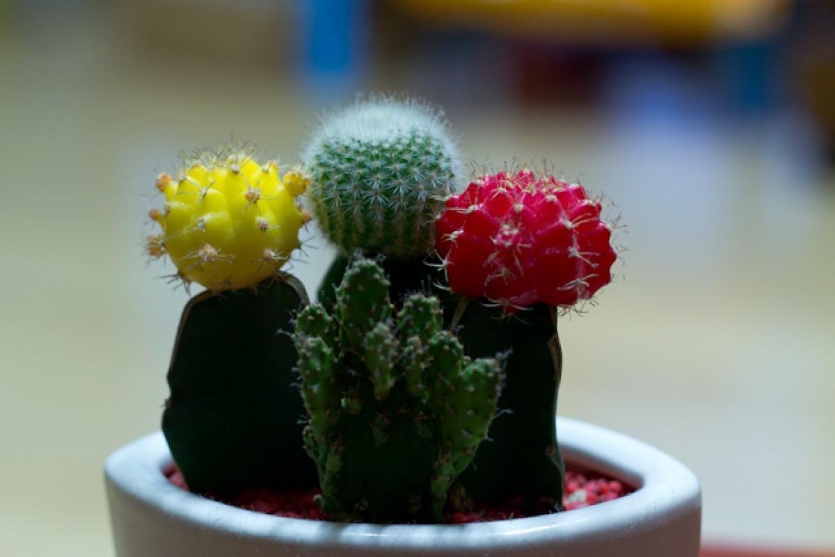 POTD day 6 - cacti