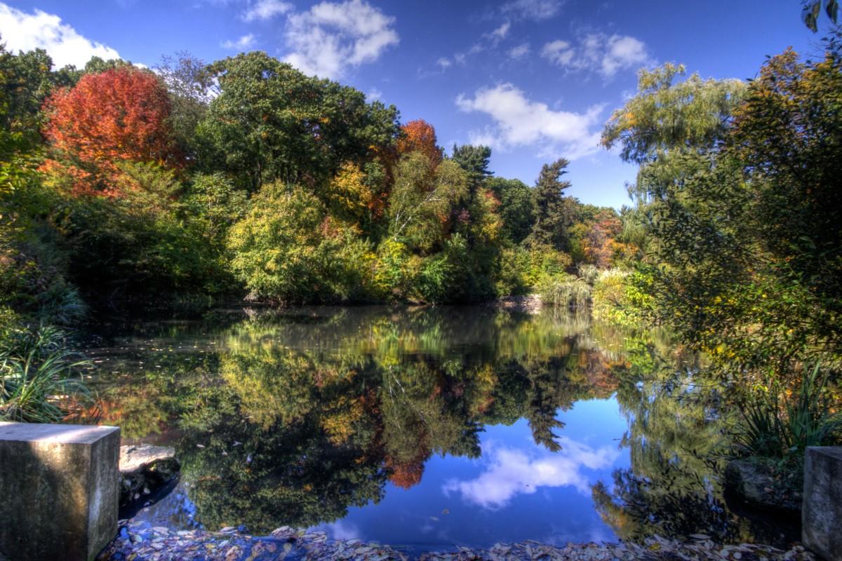 High Park Reflection