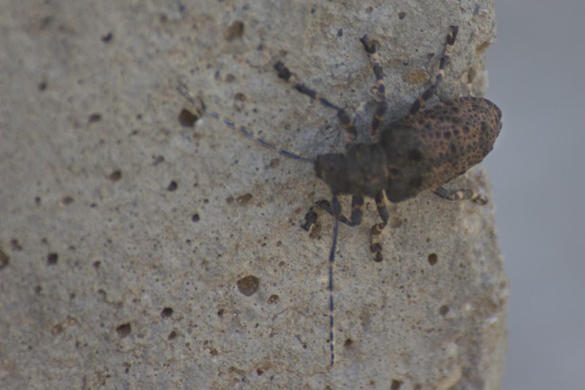 POTD day 134 Bug