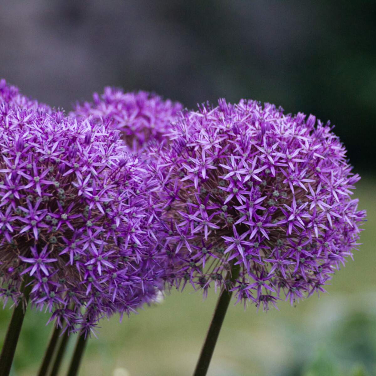 What is this flower called?