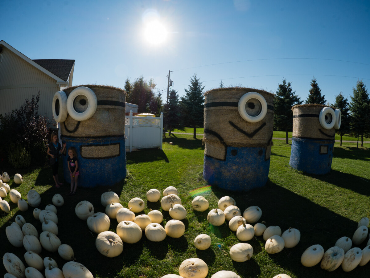 White Pumpkins and Minions