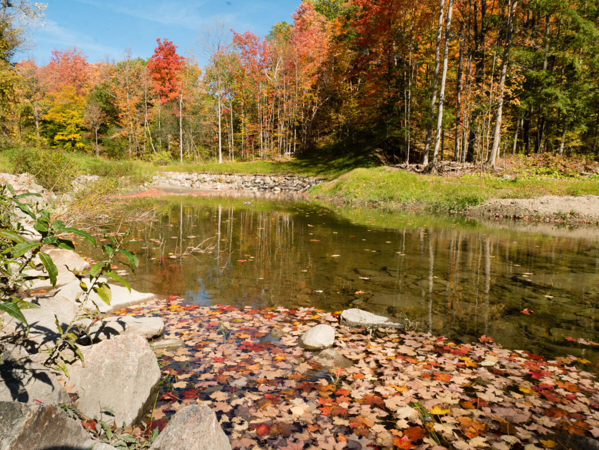 Wilket Creek Fall Colors