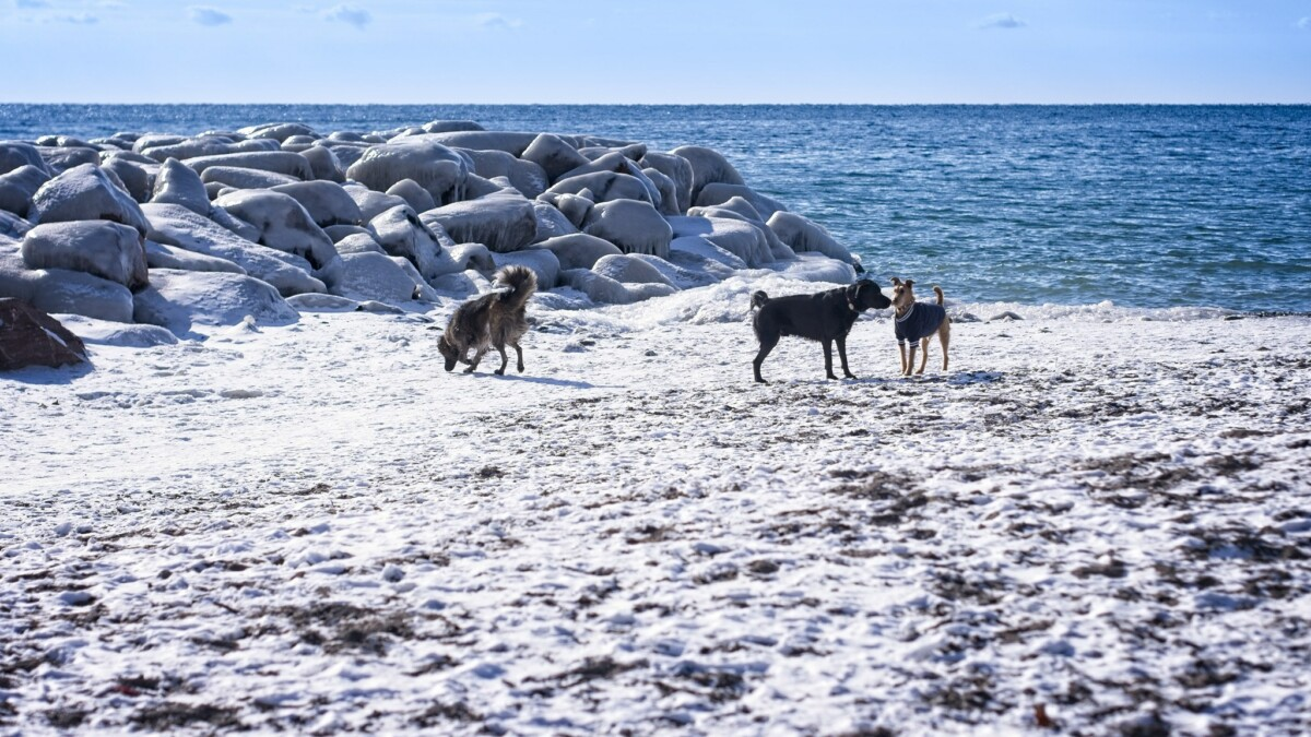 Dogs on a Frozen Beach
