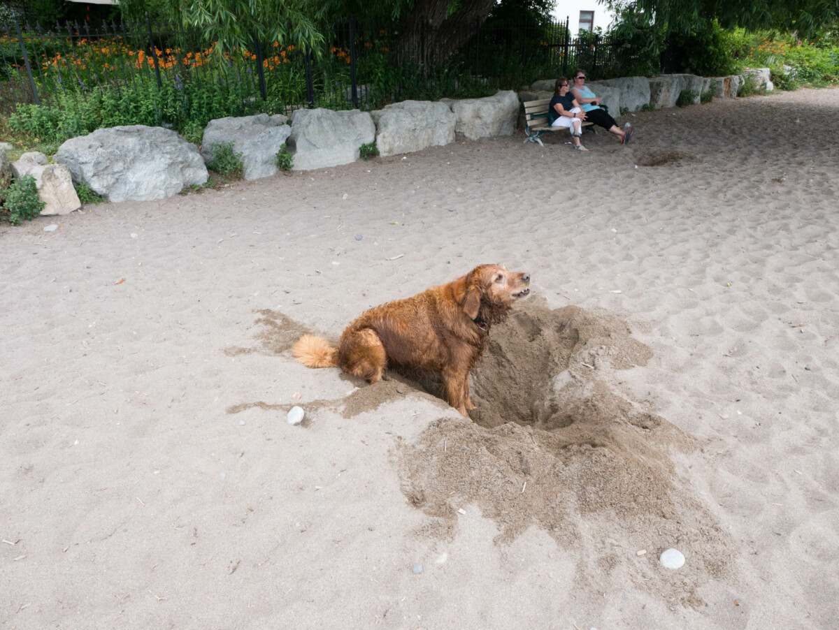 Buried Bone