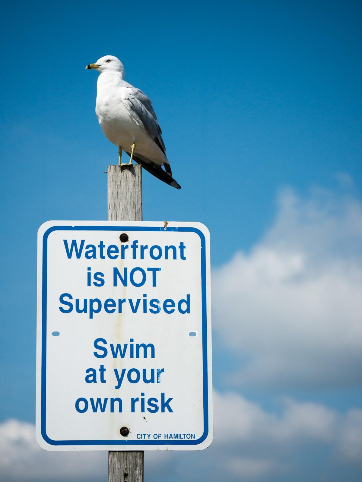 Seagull Lifeguard