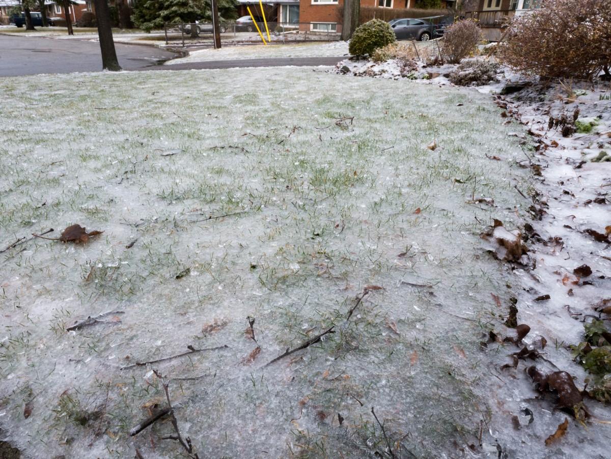 Iced Grass